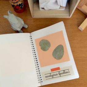 dansmabesace-carnet-tactile-eucalyptus