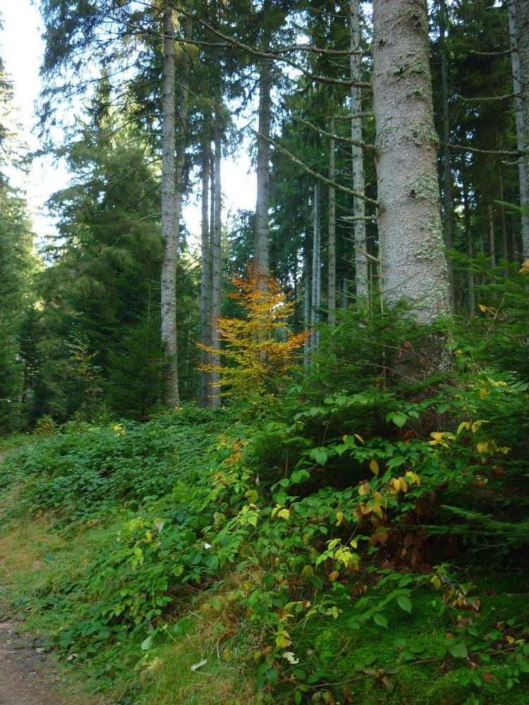 dansmabesace-arbres