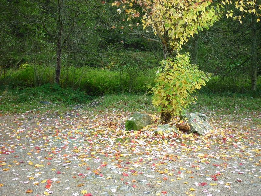 dansmabesace-les-feuilles-dautomne