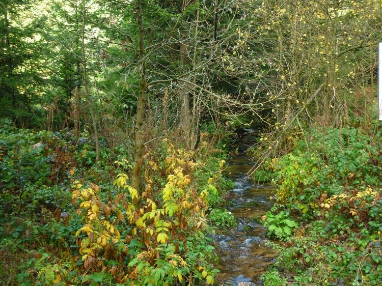 dansmabesace-vegetation