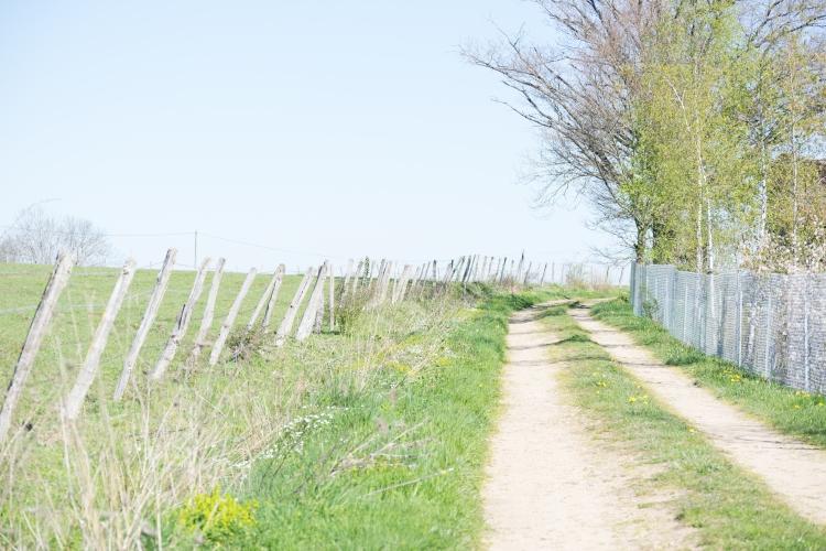Dansmabesace - Printemps auvergnat - Sentier3.jpg