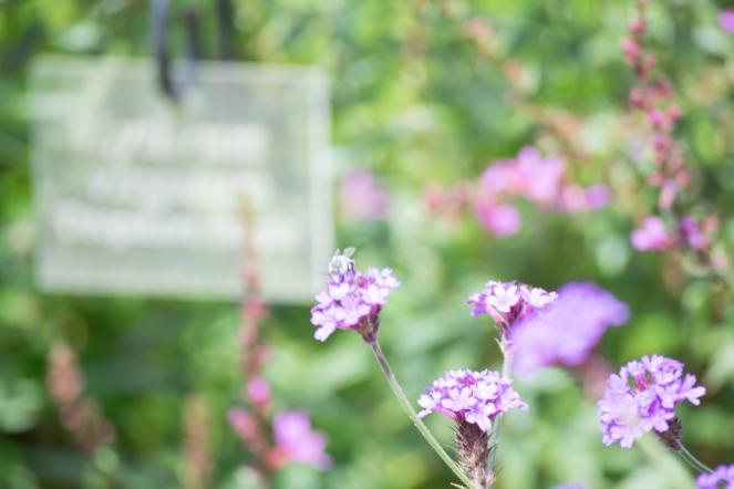 Dansmabesace - Slowlife - Parc floral Apremont sur allier - Abeille butine