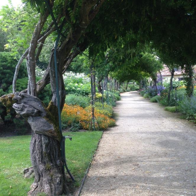 Dansmabesace - Slowlife - Parc floral Apremont sur allier - Glycines