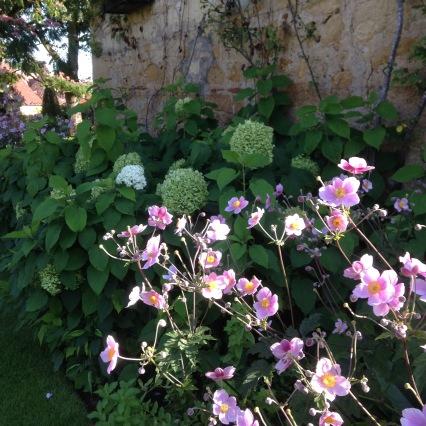 Dansmabesace - Slowlife - Parc floral Apremont sur allier - Végétation méridionale rose