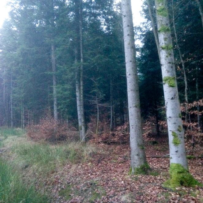 Dansmabesace - Center parcs Les Trois Forêts - Balade dans les bois.jpg
