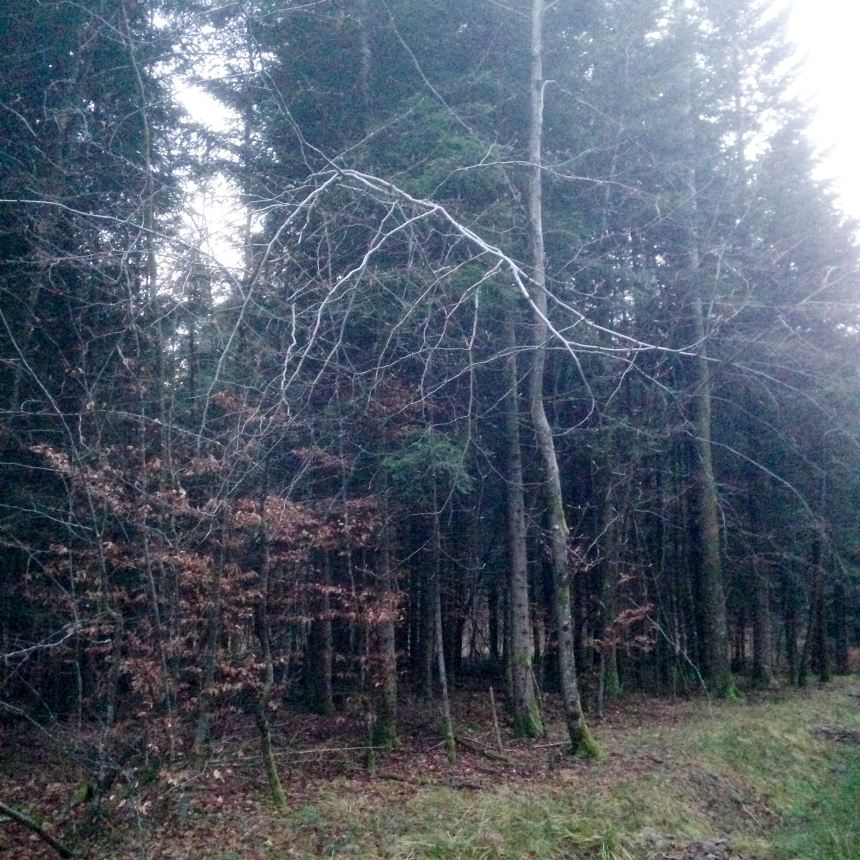 Dansmabesace - Center parcs Les Trois Forêts - Balade dans les bois2.jpg