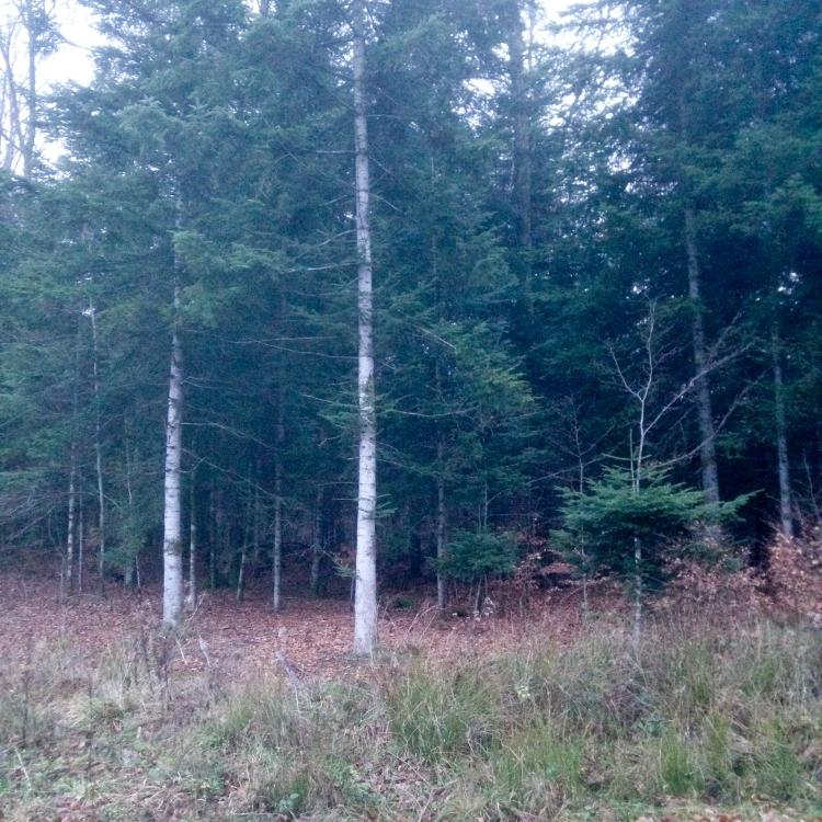 Dansmabesace - Center parcs Les Trois Forêts - Balade dans les bois3.jpg