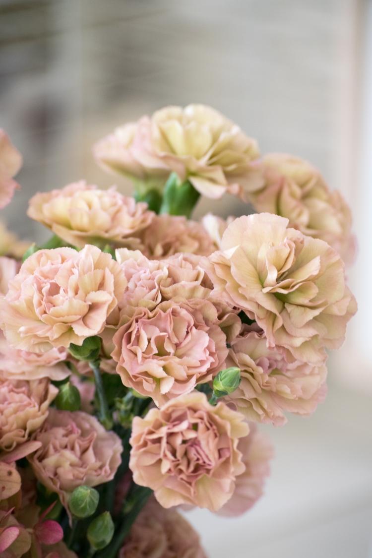 Dansmabesace - Happy 2 Rose - fleurs2